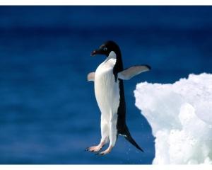 penguin_jumping_wallpaper-1280x1024