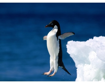 penguin_jumping_wallpaper-1280x1024